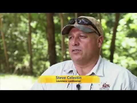 Nursery, Atlantic Marine Alliance, Food Safety, Feral Hogs, Fire Ants - America's Heartland