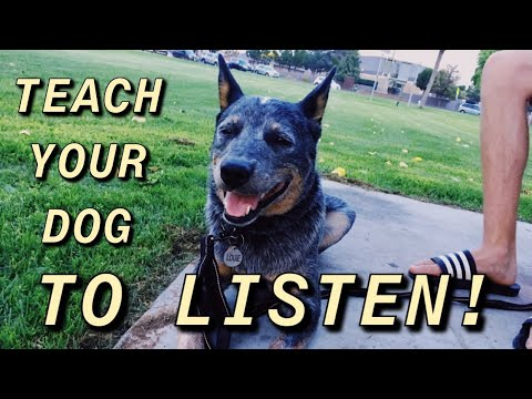 How to get your Dog to Listen when Distracted