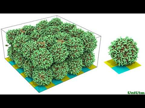 Hydrated membrane consisting of polymer micelles (1440p HD resolution)