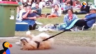 Dog PLAYS DEAD to Avoid Going Home While Park Crowd Watches | The Dodo thumbnail