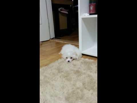 잠들듯말듯(Sleep Dog)