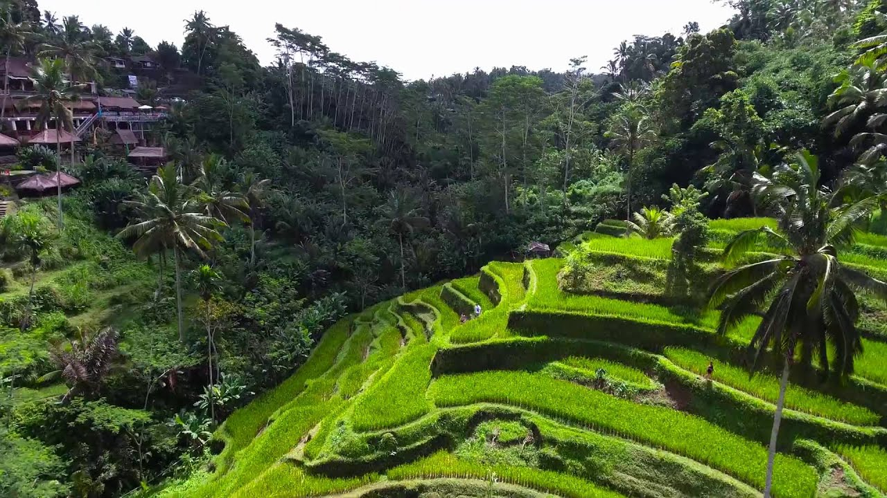Dji phantom 4 crash in bali island indonesia tegalalang for Tegalalang rice terrace ubud