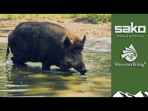Nightshooting Wild Boar With Thermal