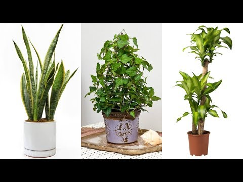 get-rid-of-mold-successfully-with-these-common-house-plants