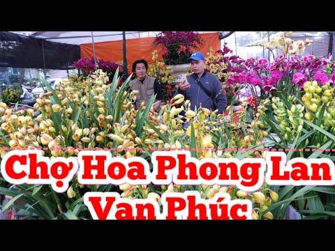 Chợ hoa phong lan Vạn Phúc Hà Đông Hà Nội   Van Phuc orchid flower market Ha Dong Hanoi   BĐS Hà Nội