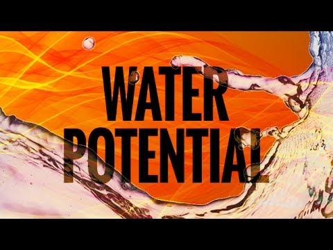 A3Academy: Water Potential