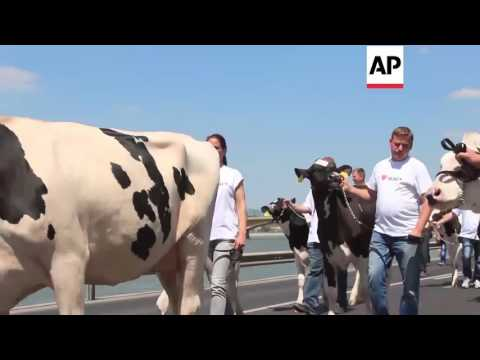 Hungary - Cows herded to Prime Minister's office in dairy demo | Editor's Pick | 23 May 16