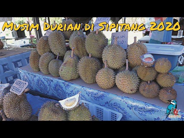 Musim Durian di Sipitang 2020