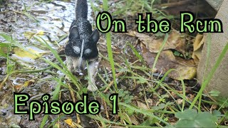 On the Run(EP1)-Toy Animal Series-