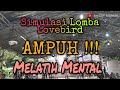 Simulasi Lomba Lovebird Terbaru Terbukti Ampuh Menaikkan Mental Di Lapangan  Mp3 - Mp4 Download