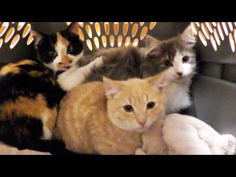 NEW Kittens!