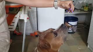 Как научить собаку делать ЗАЙКУ