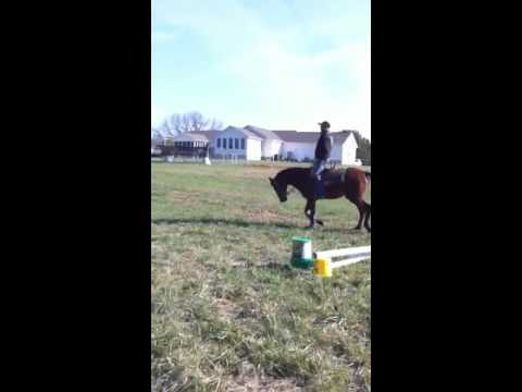 """2 yr old gelding by """"It's All About Blue"""""""