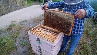 Fikret Baydemir Arılarım kestane balını yapmış ...
