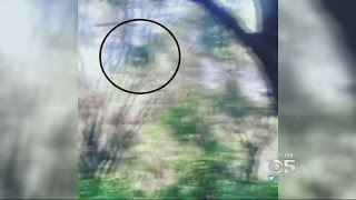 SOCAL MYSTERY:  Video of an what appears to be a swing ape creates Southern California mystery