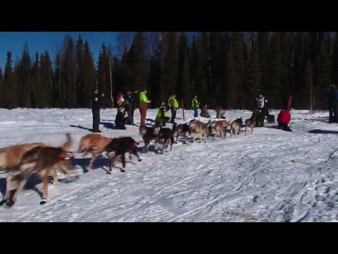 2016 Iditarod Dogsled Race To Nome Alaska - 2016 Iditarod Do