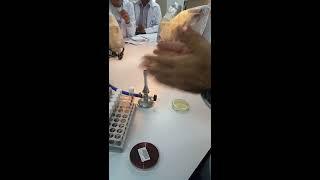 Mikrobiyoloji/ Katı-sıvı Besiyeri Ekimi