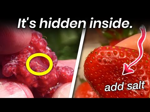 The Truth Behind The Hidden Worms In Your Strawberries