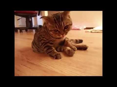 Кот парад на Ю смотреть онлайн все серии - Смешное видео