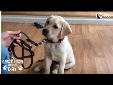 download Guide Dog Gets So Excited When She Sees Her New Home - SMUDGE | The Dodo Adoption Day