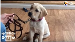 Guide Dog Gets So Excited When She Sees Her New Home  SMUDGE | The Dodo Adoption Day