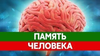 видео Виды памяти. Способы запоминания - Виды и типы памяти - Психология памяти - Каталог статей - Психология личности