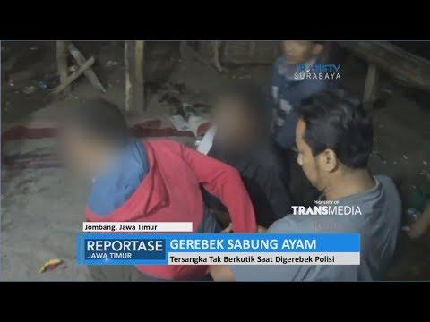 Kepergok Judi Sabung Ayam, 5 Pelaku Diamankan Polisi - 동영상