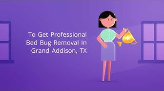 OCP Bed Bug Exterminator Addison, TX - Bee Removal