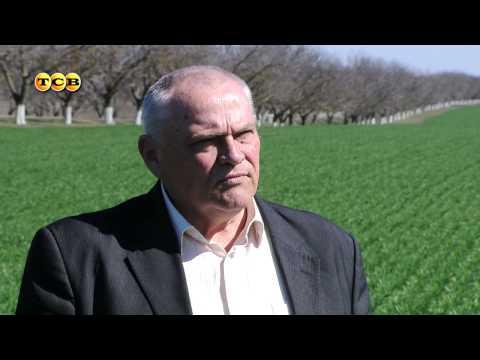 Казах-Зерно - новости, аналитика и цены зернового рынка