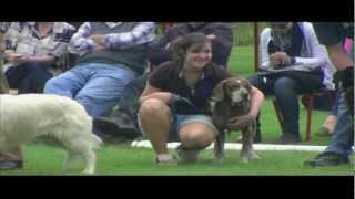 Dog Show - I Am The Best - Ashford, Wicklow, Ireland