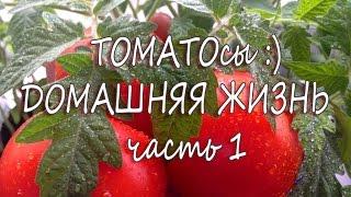 Рассада помидоров в домашних условиях. Часть 1(Приветствуем вас на канале Видео ОГОрод! В этом видео расскажу как и когда начинать сажать помидоры в домаш..., 2016-03-27T20:03:51.000Z)