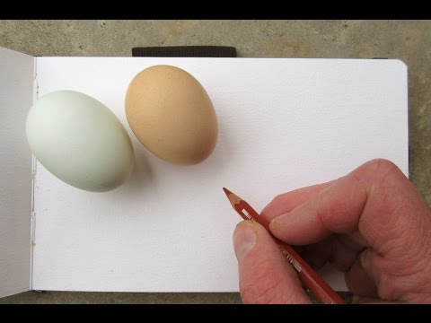Chicken and Egg: Sketching from Life