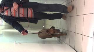 Видео 2  Протезированием лучевой кости у собаки после удаления саркомы(, 2014-08-18T07:07:55.000Z)