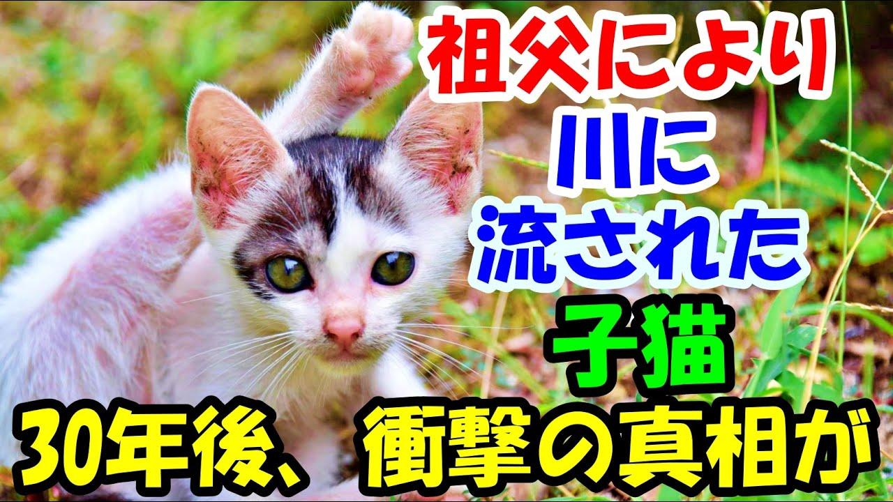 祖父により川に流された子猫。30年後、衝撃の真相が【猫の不思議な話】【朗読】