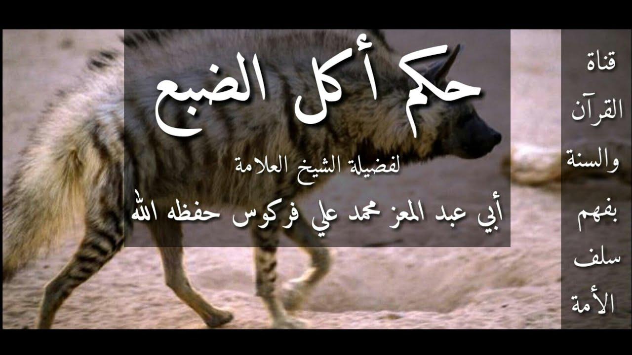 ما حكم أكل الضبع صحيفة المواطن الإلكترونية