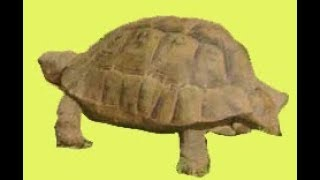 Черепаха мама и её бэби в Африке!