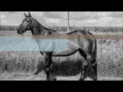 Indy Fuse - '06 Gentleman Hunter/Eq Prospect