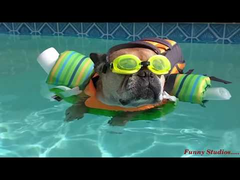 Funny Dog Videos Your Funny Videos