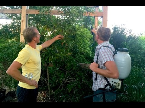 How To SUPERCHARGE Your Edible Fruit Trees -