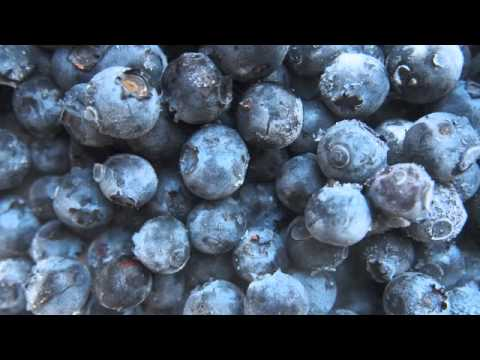 Blueberries Increase Life Span Beyond Calorie Restriction