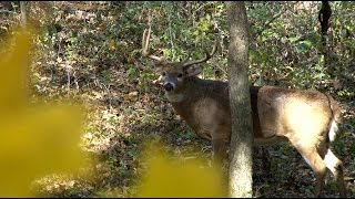 Wisco Whitetail, Lopside (Robin Hood Productions)