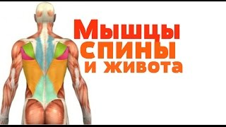 Видео-урок по анатомии . Мышцы спины и живота / М'язи спини і живота