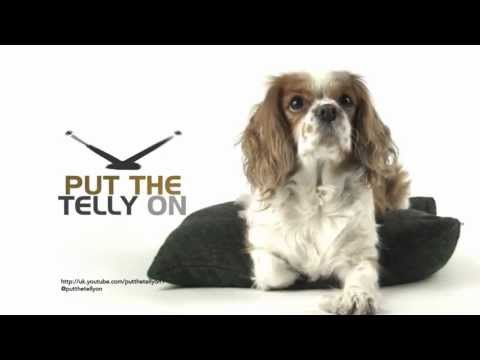 """Put The Telly On """"Spaniel"""" Ident 