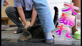 【地域猫】流血のフロントライン~重役出勤遅刻魔スラリン大暴れ~【魚くれくれ野良猫】 thumbnail