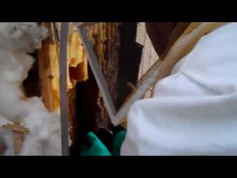 Bee Removal Tucson Pest Control - Essential Pest Control