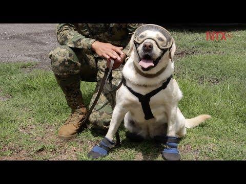 Binomios caninos: entre el valor y el heroísmo