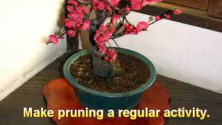 5 Proven Tips on How to Care For a Bonsai Tree Successfully
