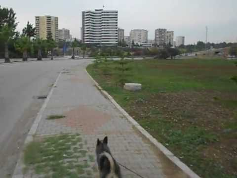 dog travel turkey in adana 17