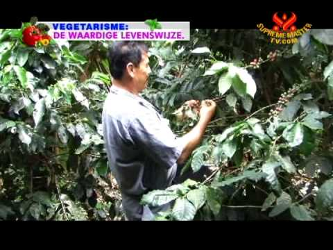 From Fields to Families: Nuturing Organic Coffee Beans in Colombia (In Spanish)