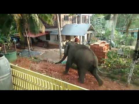 Elephant Attack In Palakkad, Kerala, India